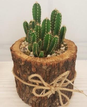 Kütük içerisinde özel kaktüs bitkisi  Ankara Gölbaşı hediye sevgilime hediye çiçek